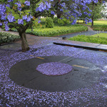 Clearing a circle under a jacaranda tree