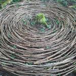 Arranging sticks to form circle pattern. Kamiyama, Japan.