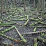 Arranging Wood Cover Locks In Triangle Forms. Kamiyama, Japan.