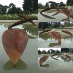 Sculpture installation of several mild steel leaves in a pond. Private client, Lourensford, Somerset West, South Africa.