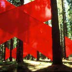 Installing several red fabric crosses in the Tokai forest. Cape Town, South Africa.